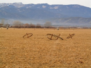 Empty fields and topsy turvy irrigation wheels