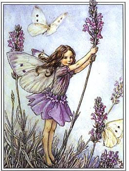 lavender-cecilymarybarker