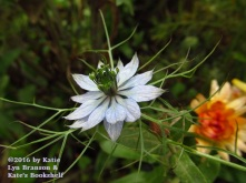 Alien Flower (Nigella or Love in a Mist)