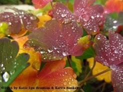 Rainbow and Drops (columbine leaves)