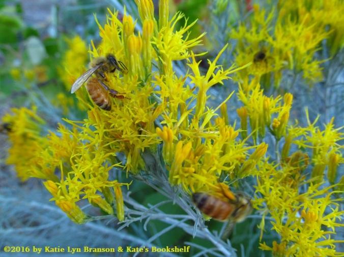 sagebrush-bees