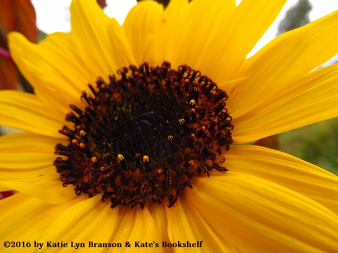 sunny-sunflower