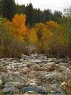 Up a Creek Slowly